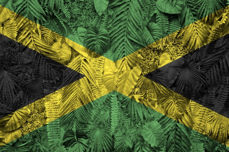 Jamaica flag depicted on many leafs of monstera palm trees. Trendy fashionable background